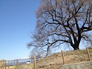 王仁塚の桜と八ヶ岳