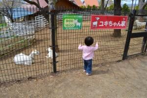 ハイジの村ユキちゃん